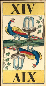 [Animal Tarot]